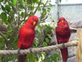 two-red-birds.jpg